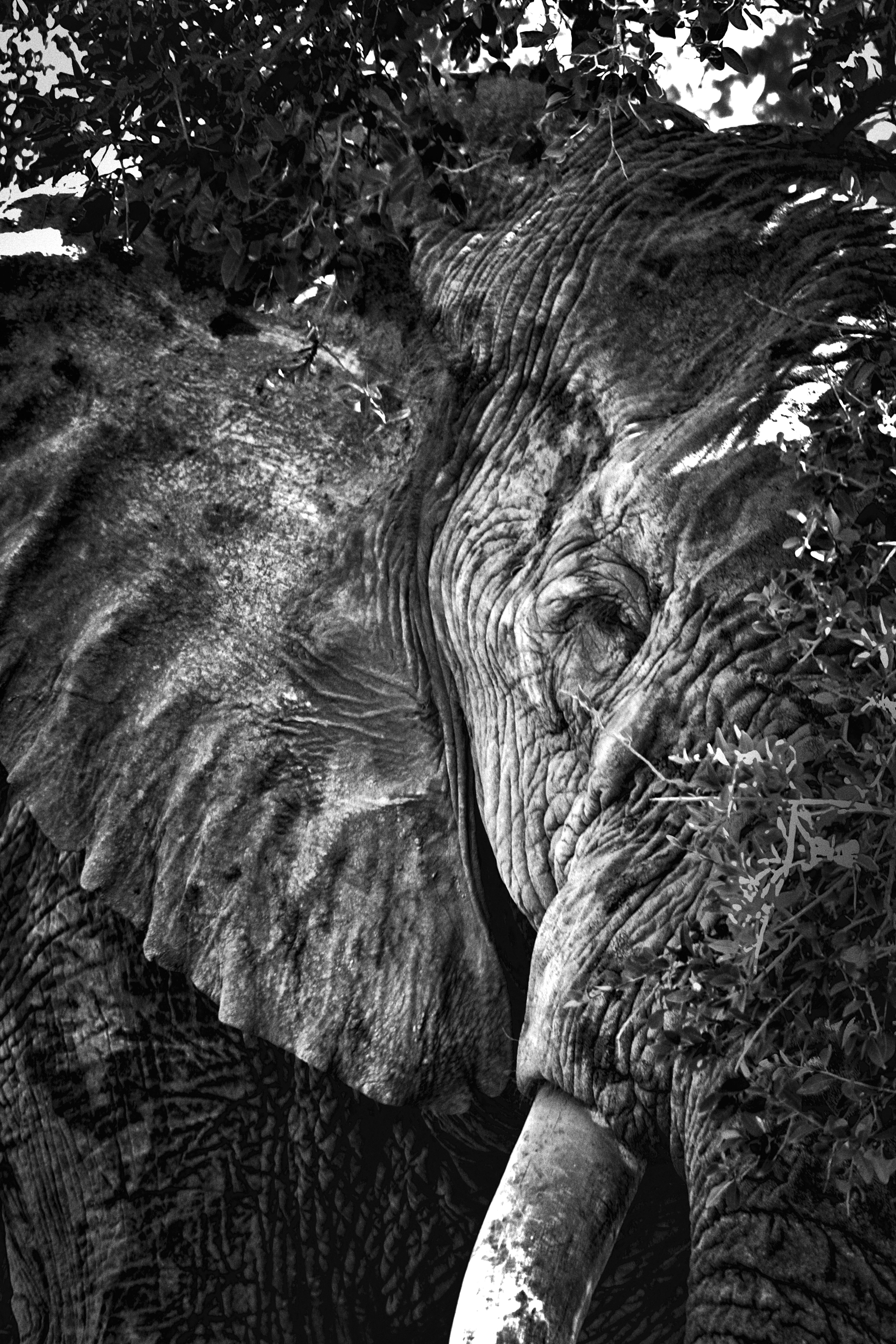 Project-ELEPHANT     20090328_Picture 179