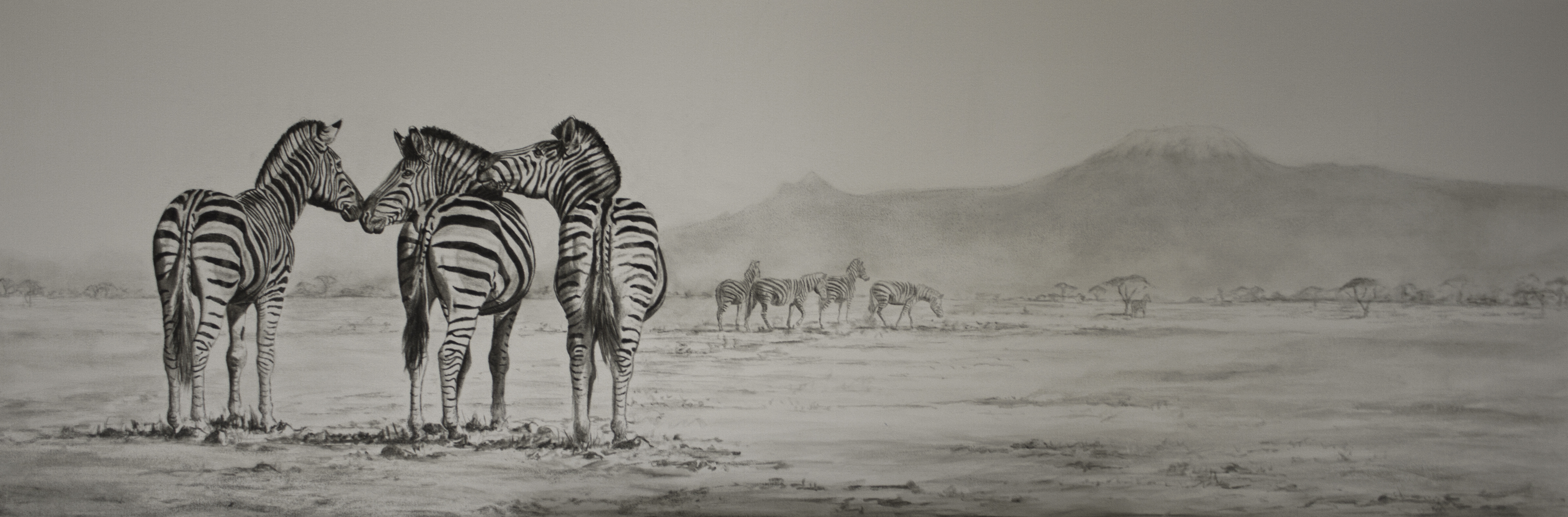 Zebras on the plain