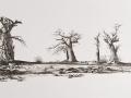 Baobabs_MG_2857_3970
