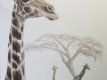 Giraffe IMG_5271_8329
