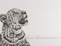 Leopard Stare Studio Ekaterina Exhibition