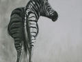 ZEBRA SKETCH 5 SET