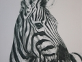 Zebra Paintings PORTRAIT 1 PARREIRA