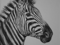 Zebra Paintings PORTRAIT 2