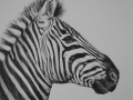Zebra Paintings WATCHFULL