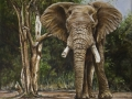 4 Elephant in African Bush Oils on canvas - 300 x 300 _MG_1908.jpg