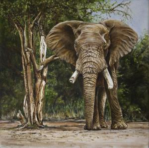 Elephant in African Bush