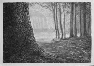 TREE TRUNK CHARCOAL