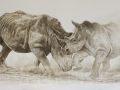 Commission for Richard Tustin Rhinos Oils on Canvas Watermarked.jpg