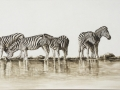 ZEBRAS AT WATERHOLE IMG_5672
