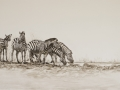 Zebra at Waterhole IMG_4810_7874