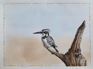 7 AUG PEN AND INK & WATERCOLOUR KINGFISHER