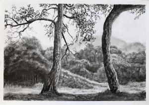 29 JULY TREES IN CHARCOAL DEMO FINAL